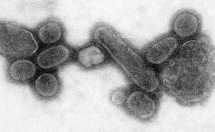 """Vírus da """"Gripe Espanhola"""""""