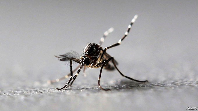 Anopheles mosquito shows super resistance to insecticides - Study