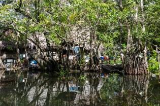 Living in the Mangroves (I)