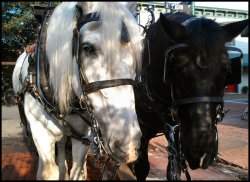 Carriage Tours of Savannah