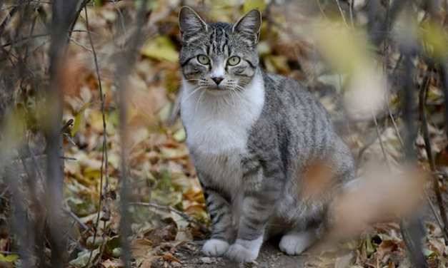 Proposed Citywide Cat Program Environmental Review Process