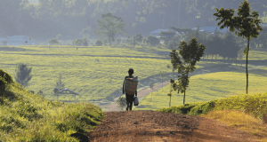 Reporting Rural Poverty and Agricultural Development Programme