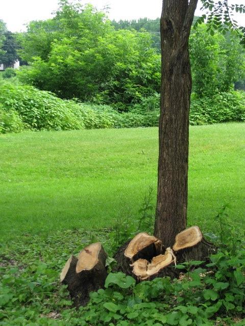 Linden Down- stumps - 1 Cucumber Alley - 21June09