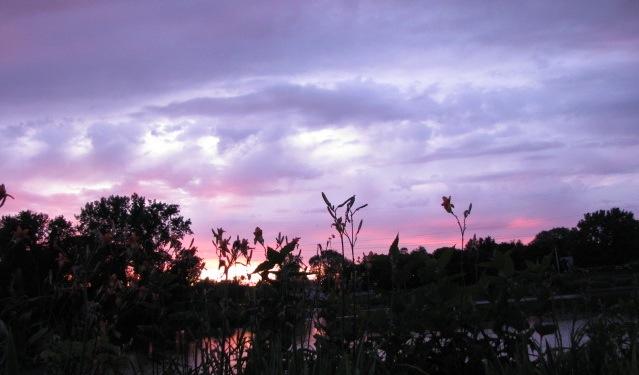 daylily sunset panorama cameo