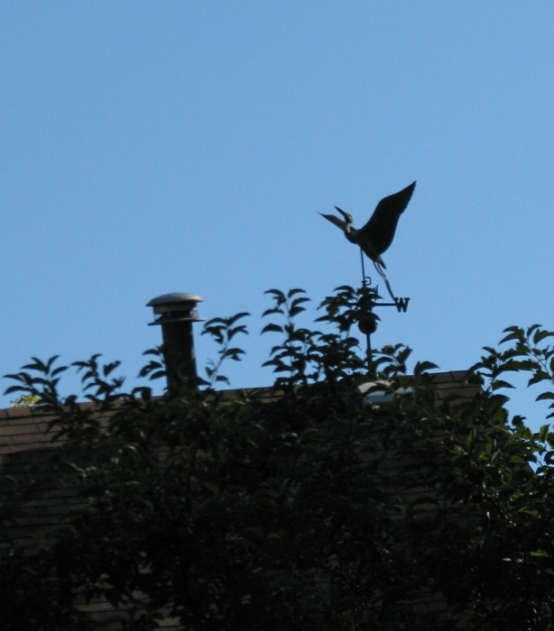 flying goose Weather Vane, above 2 Cucumber Alley, Stockade, Labor Day 2008