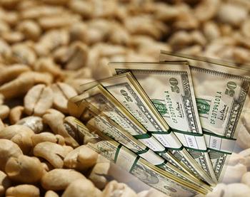Kim nghạch xuất khẩu cà phê