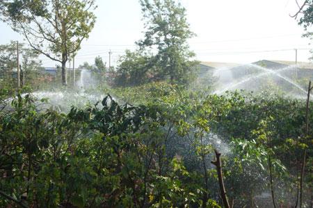 Tưới cà phê ở Đắk Nông