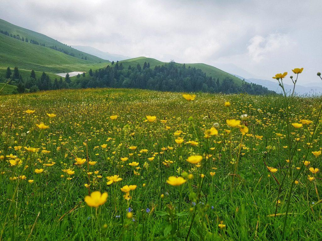 Monte Farno Valgandino - fiori