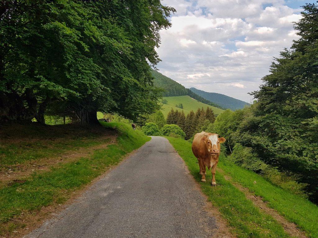 Sentiero fino al Rifugio Venini Mucca