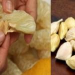 Nếu biết trước công dụng của hạt bưởi, bạn sẽ không nỡ vứt đi vì rất cần cho sức khỏe của bạn