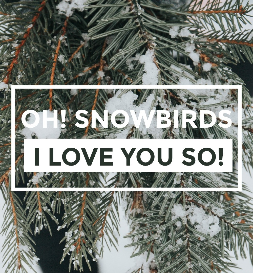 Oh! Snowbirds I Love you so!