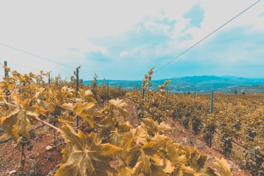 pasqua wines
