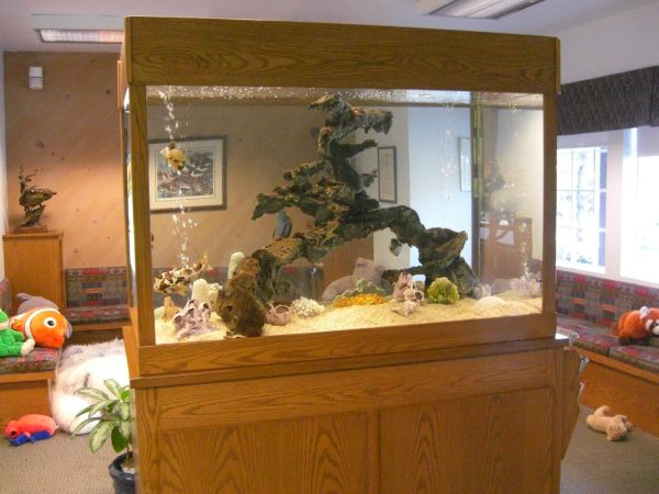 20 gallon fish tank craigslist - Craigslist Fish Tanks for