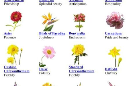 Different Flower Meanings With Pictures 4k Pictures 4k Pictures