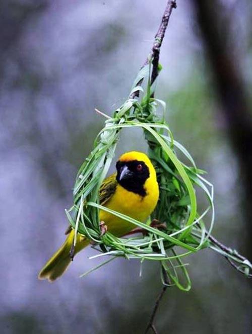 Aves em Ninho 13