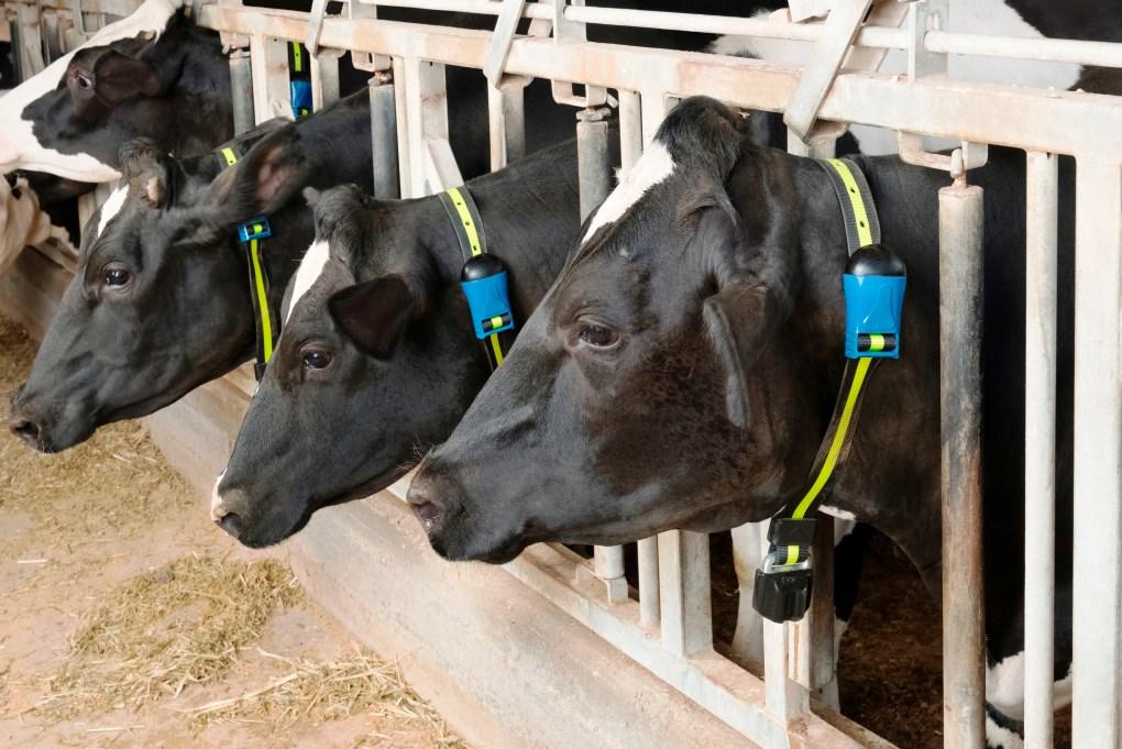 Monitoramento do rebanho auxilia produtores a melhorarem desempenho na atividade leiteira 5