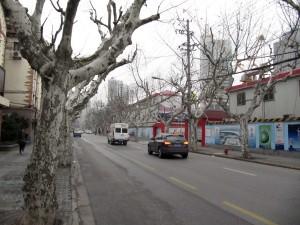 Shanghai trees