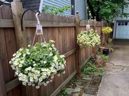IMG_5070-bgm-fence