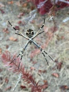 IMG_9241-spider-X