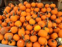 img_9790-orange-pumpkin