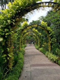 Golden Showers Orchids Arch at the Singapore Botanic Garden