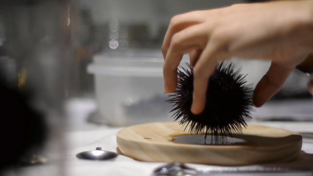 Sea Urchin (7)
