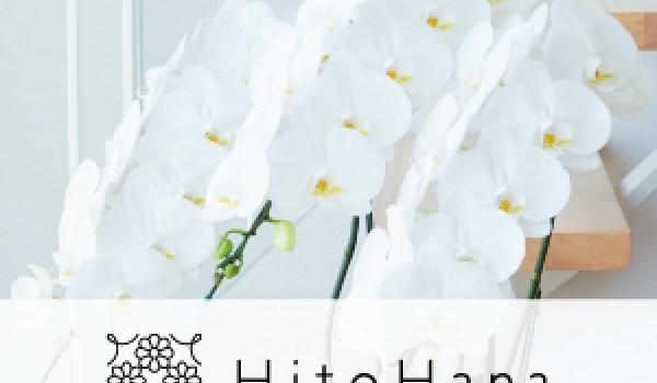 お祝いからお供えまで幅広い用途で活用されるサイト【Hit胡蝶蘭販売oHana】