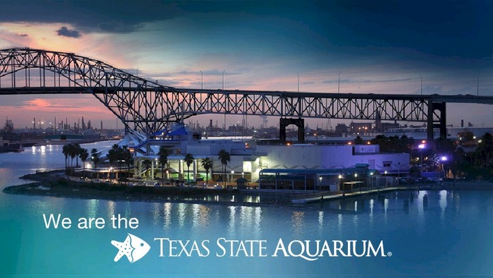 Texas State Aquarium Ticket Giveaway at KIIITV USA