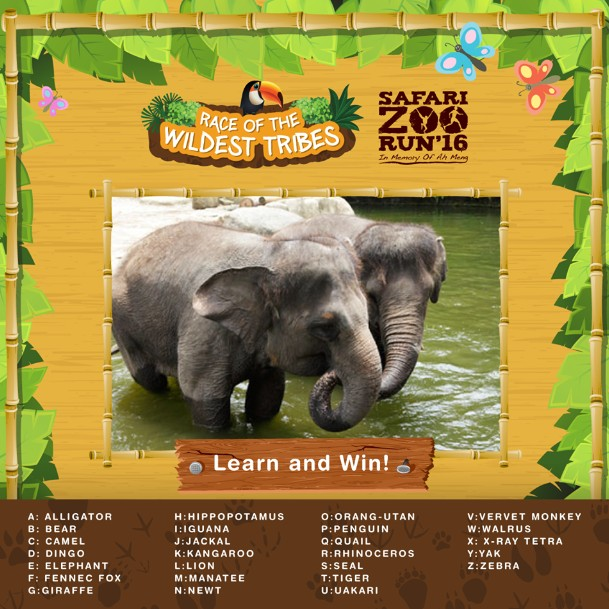 Stand a chance to win a pair of race slot to the Safari Zoo Run 2016
