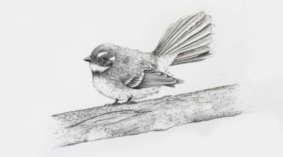 free-udemy-course-on-draw-a-realistic-fantail-using-pencil