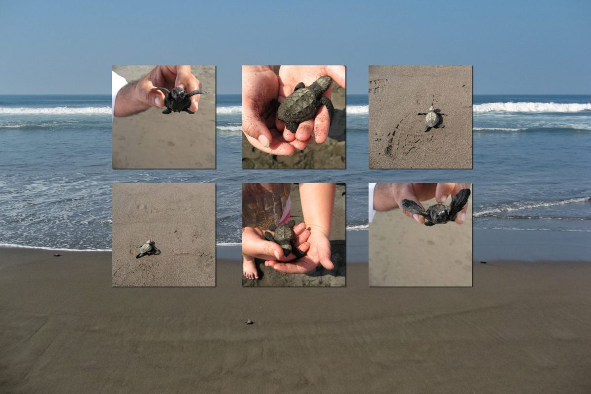 Releasing baby turtles into the ocean in Mexico