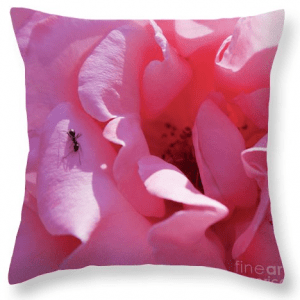 Spanish pink rose art print pillow, by Tatiana Travelways