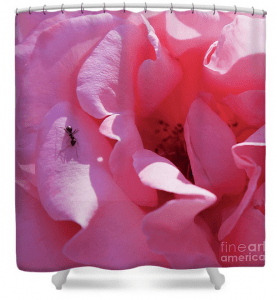 Pink rose art print shower curtain