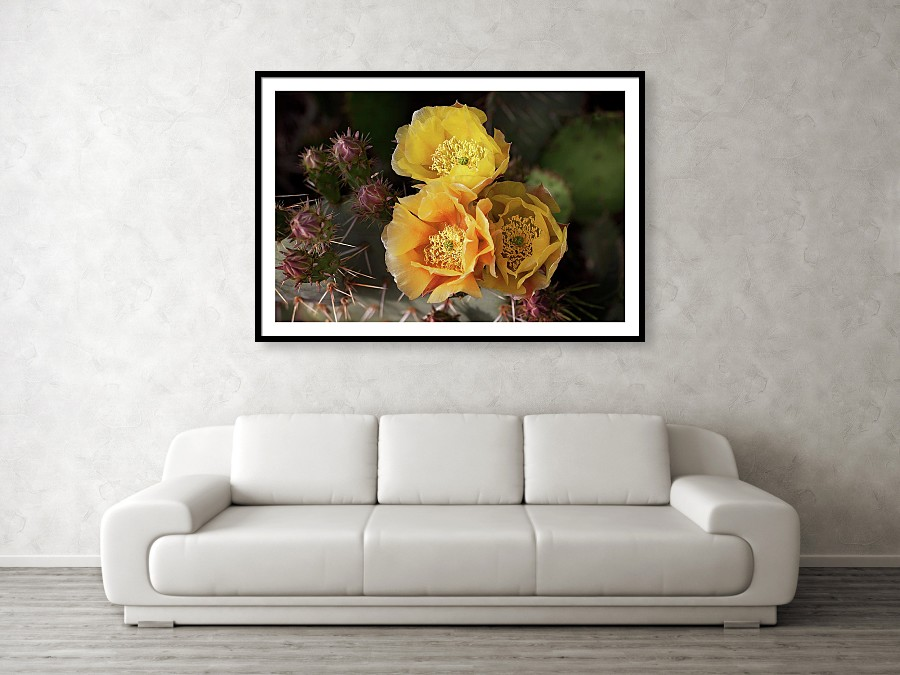 Yellow cactus flowers framed art print - gift ideas