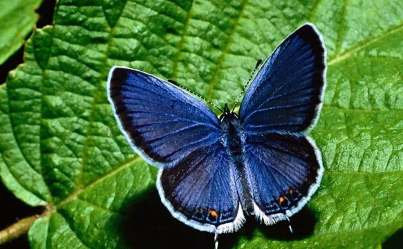 The Gift of Blue Butterflies