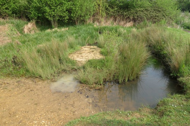 The pond before clearing