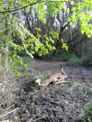 20171013_145840 deadwood oak
