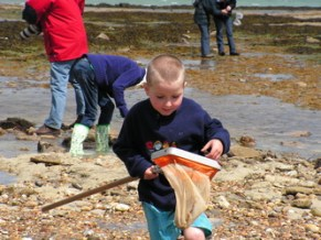 Fun on the shoreline