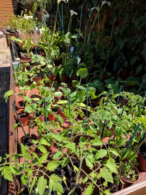 More plants