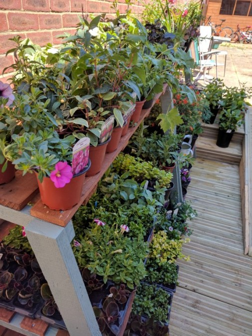 Our lovely garden section