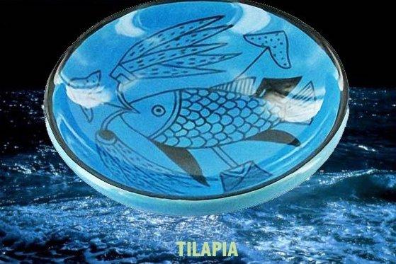 tilapia_egypte