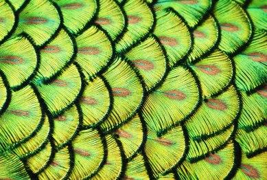 nature-pattern-photography-13