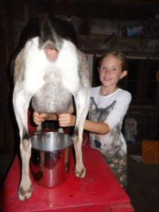 Ziegen melken... wir durften alle probieren...