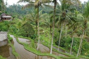 Einfach schön die Reisfelder zu sehen, immer wieder...