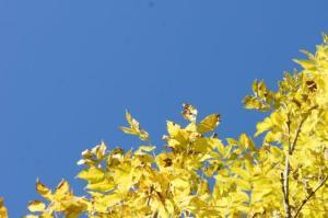 Noch ein paar Herbstblätter...