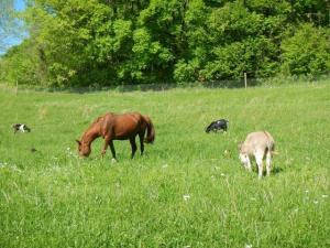 So eine Idylle... zwei Pferde, ein Esel, zwei Geissen und 80 Hühner zusammen im Gehege...