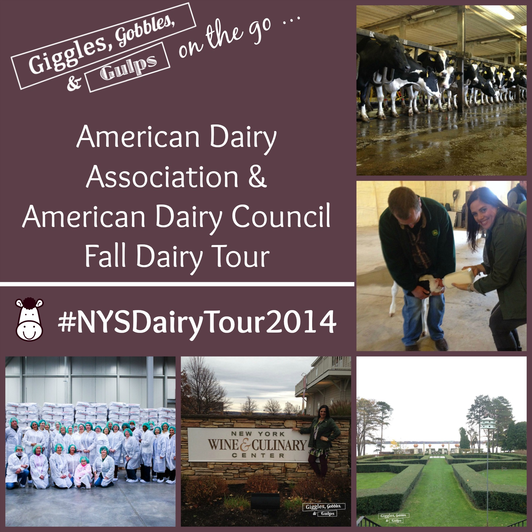 dairy tour collage