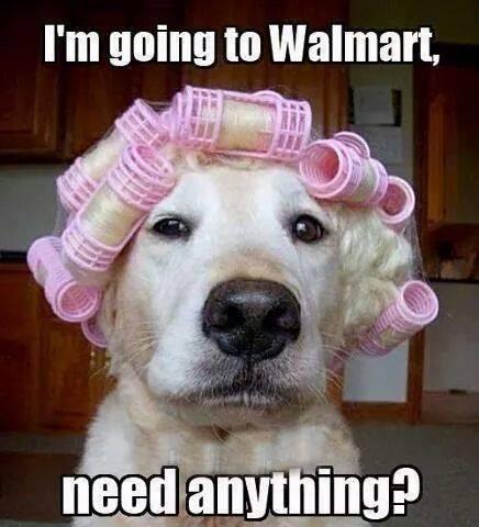 walmart-dog