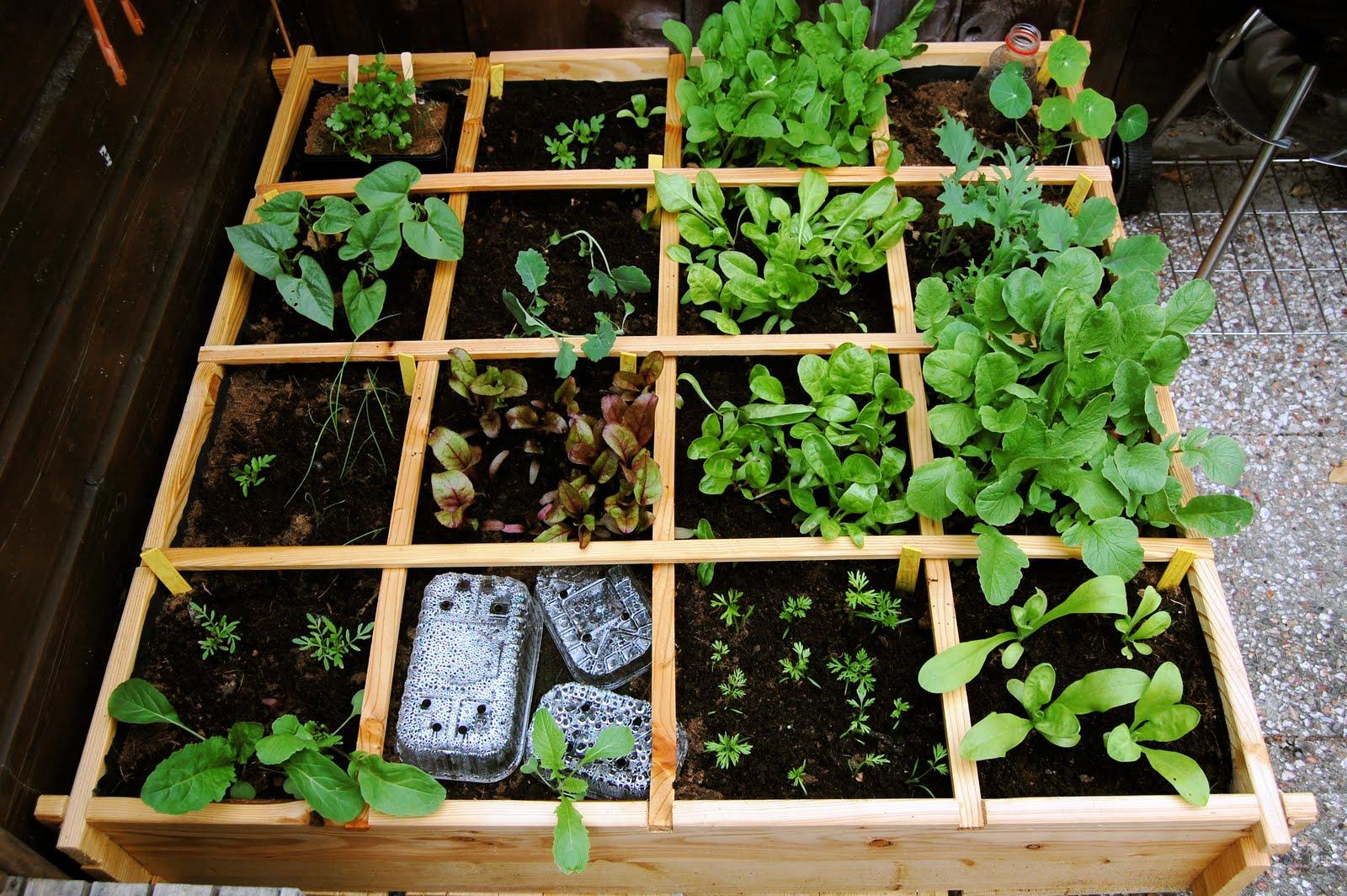 Square Foot Or Meter Gardening