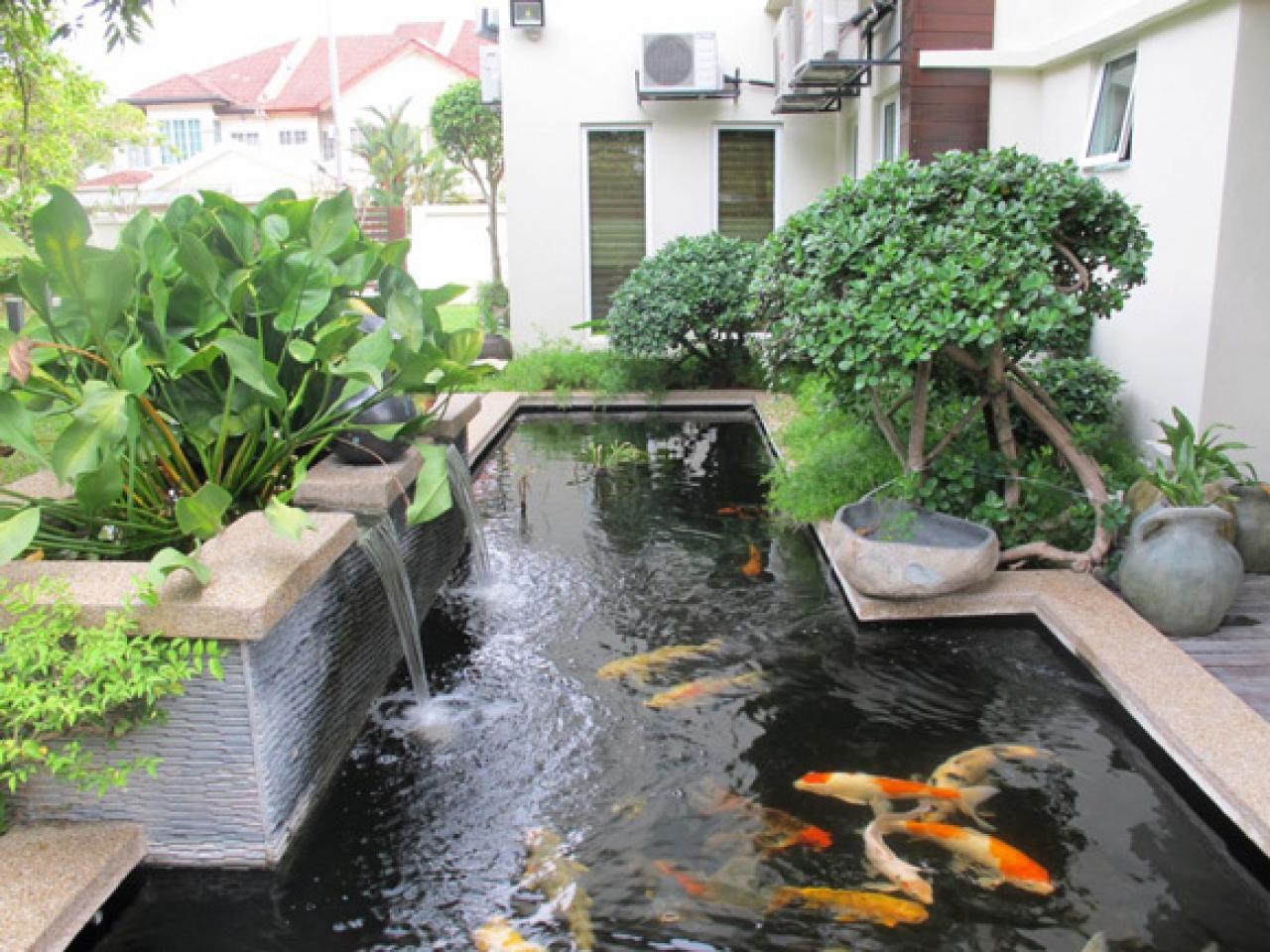 Tanaman Air Sebagai Media Filter Kolam Koi Tanaman untuk kolam ikan